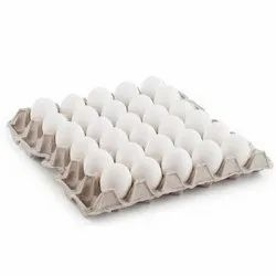 Egg Trays Project Report Consultancy
