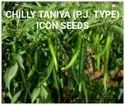 Natural Tanya Chilly Seed, Packaging Size: 50 Gm