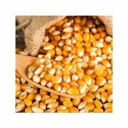 Yellow Dry Maize or maka, Organic