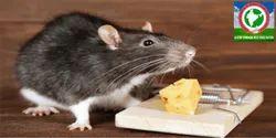 Mice And Rat Exterminators