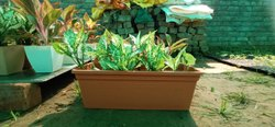 Jasmine Flower Pot