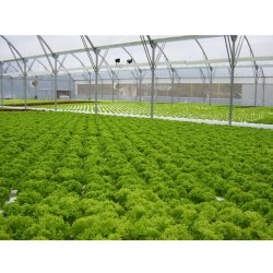 Hi-Tech DFT Hydroponic Farming Consulting Services