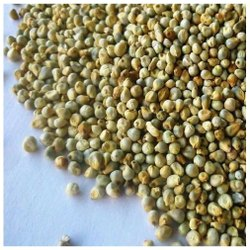 15 Kg Green Millet Bajra