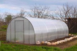 Transparent Naturally Ventilated Polyhouse