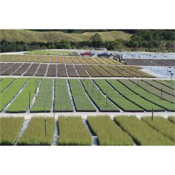 Manuka Farming Consulting Services