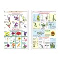 Botany Charts-II- Dicot , Monocot, Types of Leaves, Calyx And Corolla,