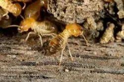 Spray Anti Termite Pest Control Services, Local