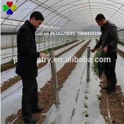 蔬菜移植仪