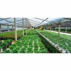 Hi-Tech Aeroponic Farming Consulting Services