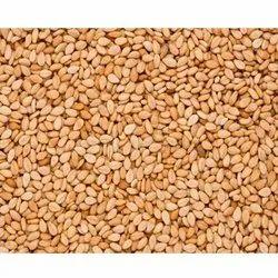Sisam Seed