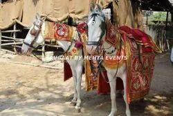 Ceremonial Wedding Horse Service, Local