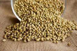 Dried Green Envigold Coriander Seed / Dhaniya / Dhania, For Cooking