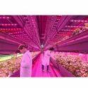Horticulture Lights