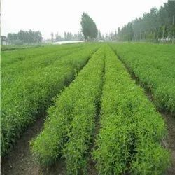 Agricultural Project Consultancy Service