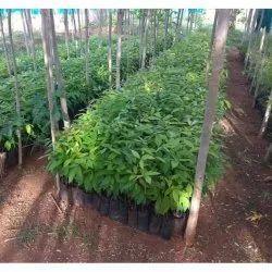 Mahogany Farming Consulting Services