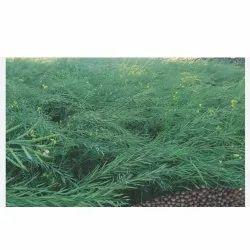 1 Kg Black Mustard Seeds, Brahma