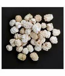 A Grade Dried Kachri, Packaging Size: 40 KG, 40kg