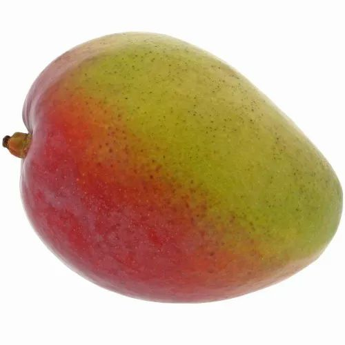 Mango Processing And Canning Project Report Consultancy