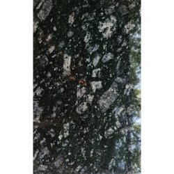 Kotda Black Granite Slab, For Flooring, Thickness: 16 mm