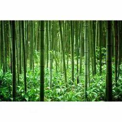 Bamboo Farming Consulting Services