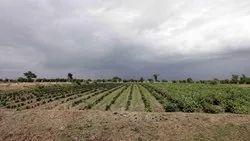 Agriculture Land Sale