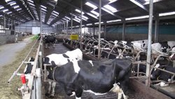 Dairy Farm Project Report Consultancy