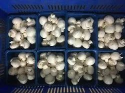 Maharashtra Button Mushroom, Packaging Type: Packet, Packaging Size: 1kg