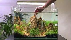 Planted Aquarium Aquascaping and maintenance service