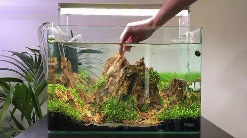 Planted Aquarium Aquascaping And Maintenance Service In Jogeshwari East Mumbai Prakash Aquarist Id 22916731248