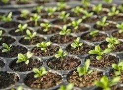 Green Agriculture, Horticulture , Ornamental Plants, For Plantation