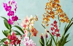 RLS orchid plant suppliers, For Gardening