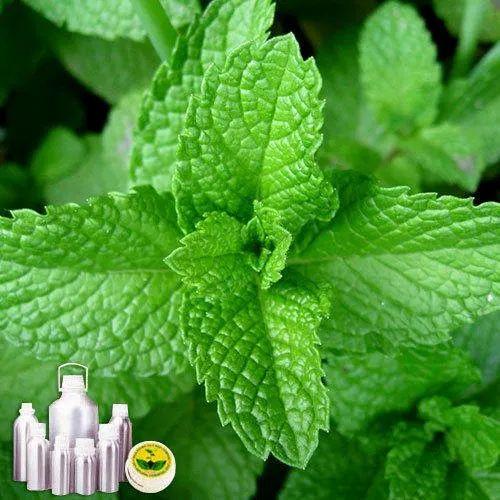 menthol essential oil 100% natural