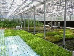Automated Greenhouse Climate Control Farming, For Industrial,Commercial, Global