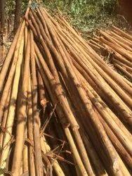 8-20 feet Brown Eucalyptus Pole