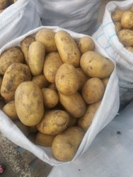 A Grade Fresh Potato, HDPE & Gunny Bag, Packaging Size: 20 kg