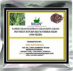Napier Grass/Elephant Grass/King Grass/Pennisetum Purpureum Fodder Seeds (5000 Seeds)