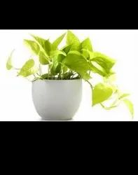 Plants For Gifting