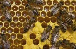 Spray Bee Control Services