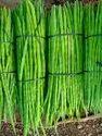 Gujarat Or Maharashtra A Grade Drumstick Vegetable, Carton, 5 Kg