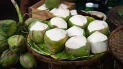 A Grade Solid Tender Coconut, Coconut Size: Large