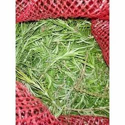 Fresh Rosemary Leaves, Packaging Type: Bag, Packaging Size: 5 Kg