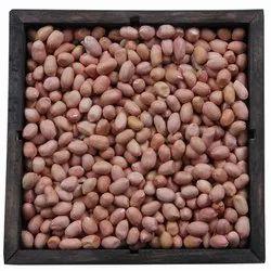Bold Peanut Kernel