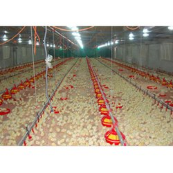 Poultry Pan Feeding Sysem