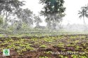 Agriculture Plastic Rain Pipe