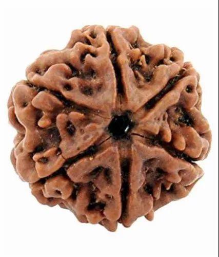 Brown 6 Mukhi Rudraksha