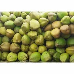 A Grade Gir Somnath Tender Coconut, Coconut Size: Large