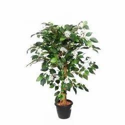 Full Sun Exposure Jasmine Plant, For Garden, Summer Bloom