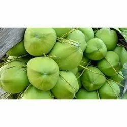A Grade Tender Raw Coconut, Packaging Size: 50 Kg, Coconut Size: Medium