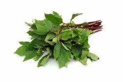 Gangura Leaves, Packaging Type: Bag, Grade: A Grade