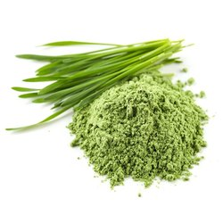Organic Wheatgrass Powder (Thinopyrum intermedium)